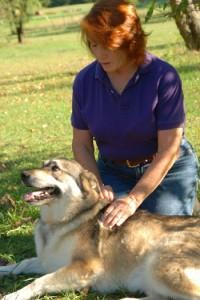 Nancy O'Donohue and animal healing