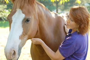 energy healing with horses